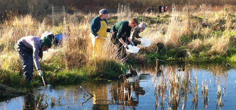 Collecting invertebrates in the wetland (Photo by Todd Carnahan)