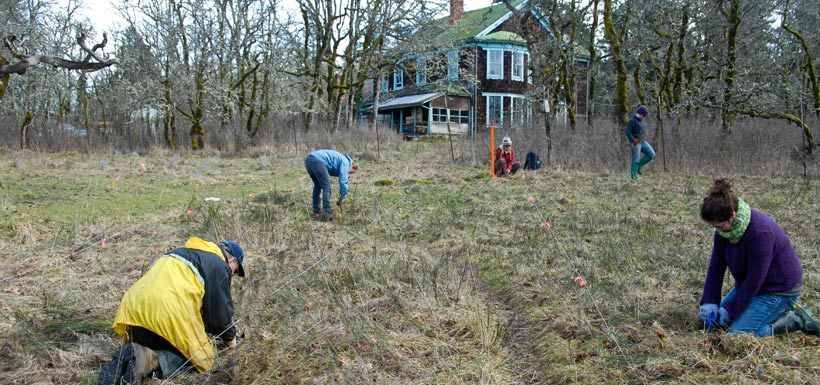 Removing invasive species, Cowichan Garry Oak Preserve, BC. '11(Photo by NCC)