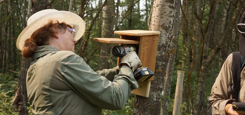 CV installing mountain bluebird box at Gambling Lake, AB. '14 (Photo by NCC)