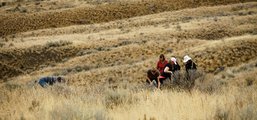 Working together at the Burrowing Owl Dig, BC '15 (Photo by E R Bramble)