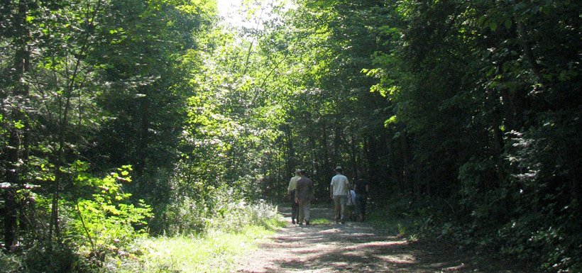 Hikers make their way through the forest at Wolf Grove