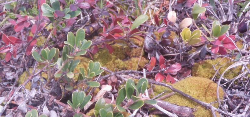 Moss and bearberry, Interlake, MB (Photo by NCC)