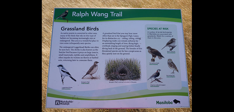Interpretive sign on the Ralph Wang Trail, MB (Photo by Ashley Greenley/NCC)