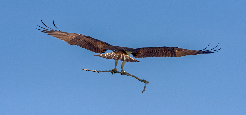Photo six: male returns with a gift (Photo by Lorne)
