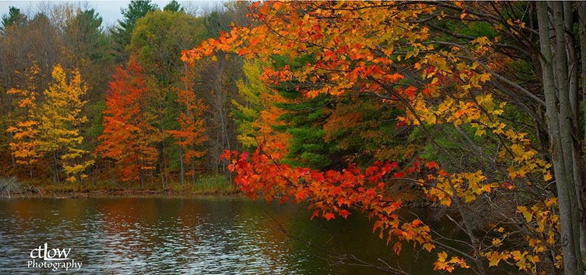 Autumn colours in the Loughborough Wilderness Block, Frontenac Arch Natural Area, ON (Photo by Charles T. Low Photography)