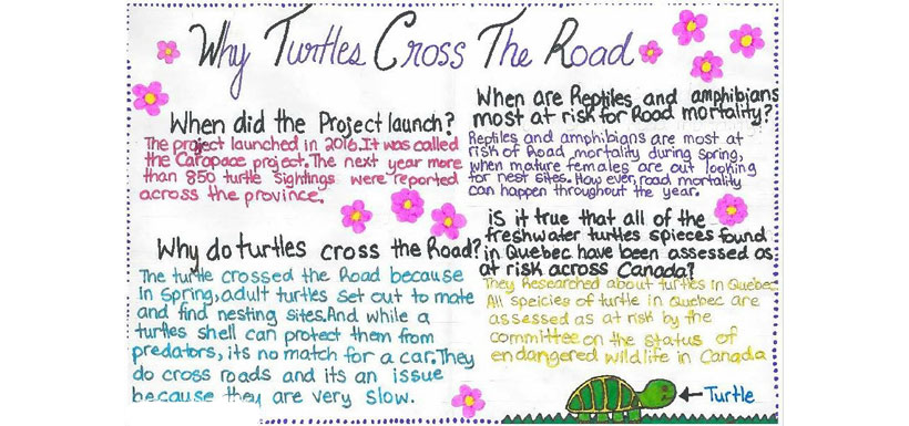 Why the turtles crossed the road assignment (Photo courtesy of Kaitlin Calla)