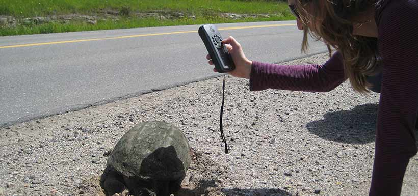 Recording an observation of snapping turtle on the roadside (Photo by NCC)