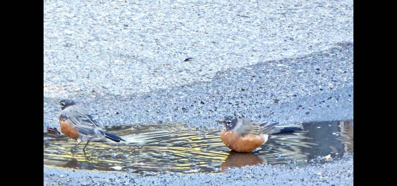 Who does he think he is trying to use my puddle! (Guy on right was first comer.) (Photo by Janis Turner)
