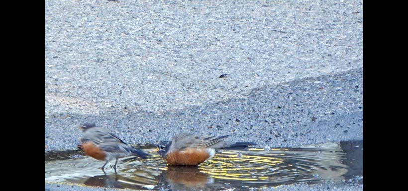 Almost out of MY puddle! (Photo by Janis Turner)