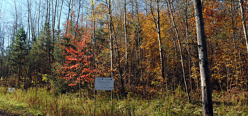 Fall at the Goldie Feldman Nature Reserve, ON (Photo by NCC)