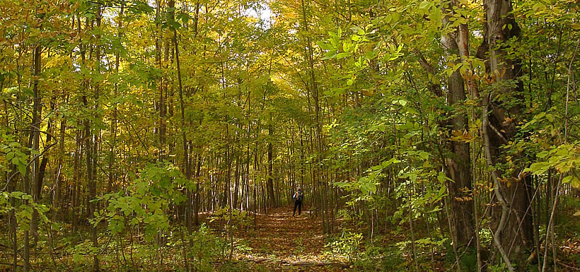 Fall colours on the John and Marylo Graham Nature Reserve, ON (Photo by NCC)