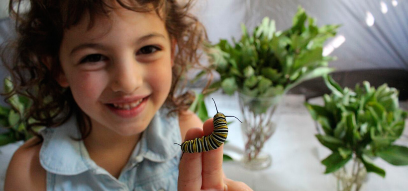 Five-year-old amateur entomologist, Hannah with a monarch caterpillar (Photo by NCC)