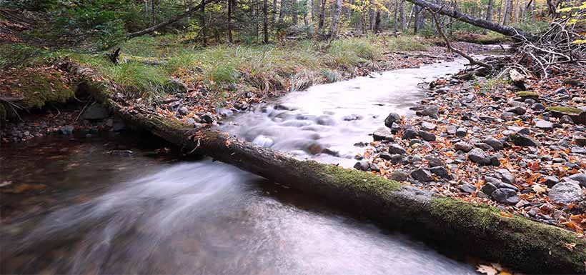 Stream on Cook property in Nova Scotia (Photo by Mike Dembeck)