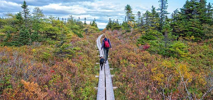 Freshwater Bay trail (Photy by Dennis Minty)