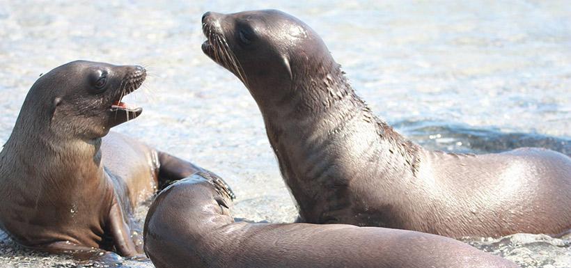 Sea lion pups (Photo by Jeff Verberne)