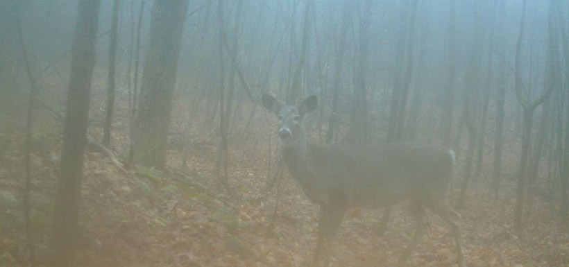 Deer in the fog. (Photo by NCC)