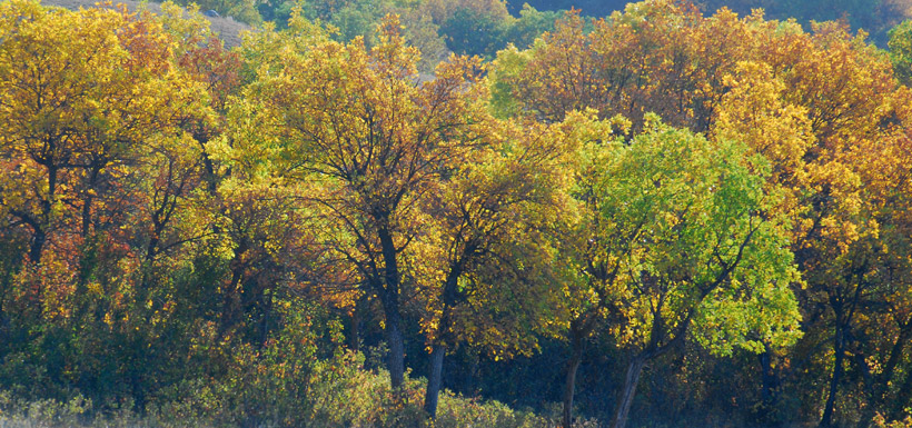Fall trees on Fairy HIll