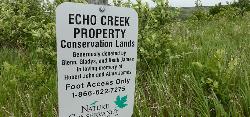 Shrub planting party at Echo Creek (Photo by Shirley Greg)