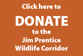 Jim Prentice donate button