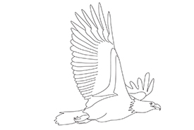 Bald eagle colouring page