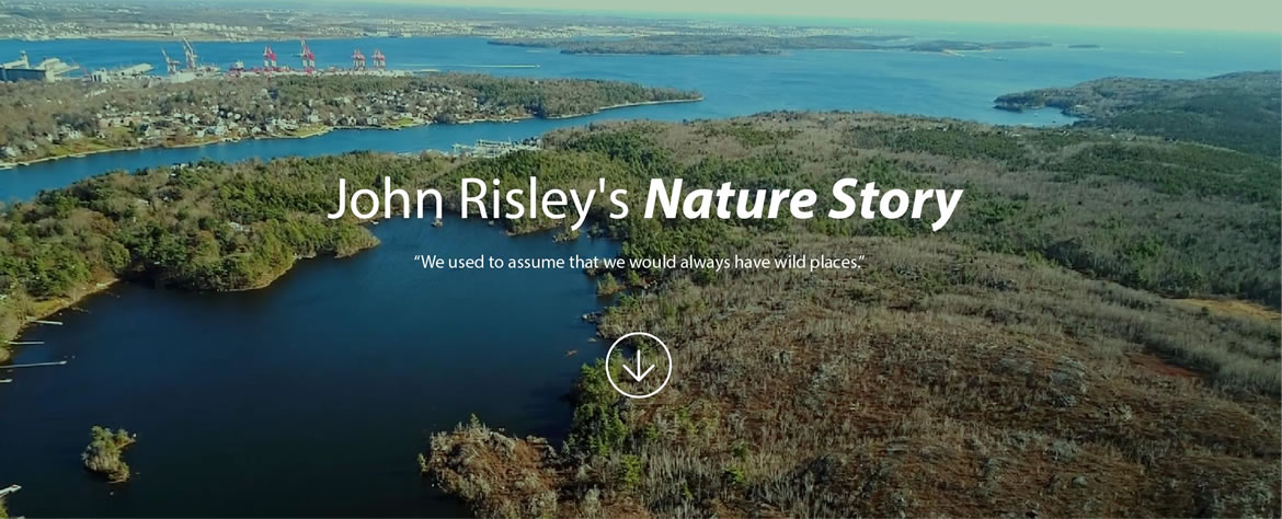 John Risley's Nature Story. - We used to assume that we would always have wild places.