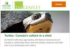 NCC's e-newsletter the Leaflet
