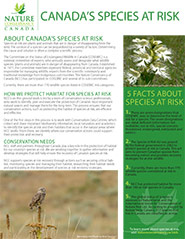 Species at Risk fact sheet