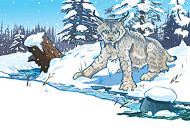 Canada lynx (Artwork by Cory Proulx)