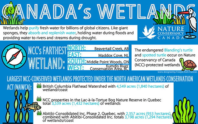 NCC's wetlands (Infographic by NCC)