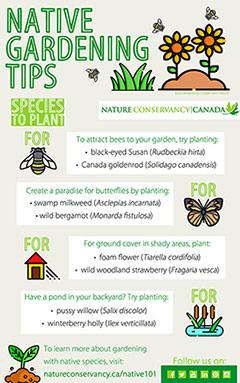 Native gardening tips