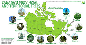 Provincial and territorial tree emblems (Infographic by NCC)