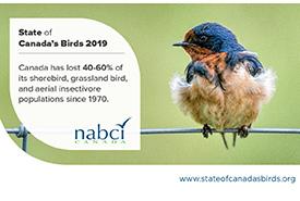 Barn swallow (Photo by Glen Springer)