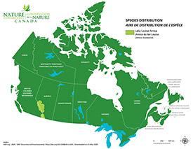 Lake Louise arnica map