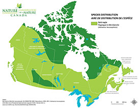 Distribution of bald eagle in Canada (Map by NCC)