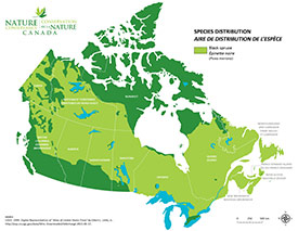 Canadian distribution of black spruce (Map by NCC)