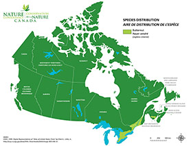 Canadian distribution of butternut (Map by NCC)