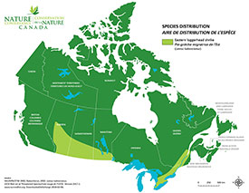 Canadian distribution of eastern loggerhead shrike (Map by NCC)