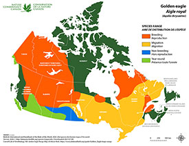 Canadian distribution of golden eagle (Map by NCC)