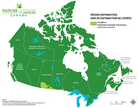 Canadian distribution of pronghorn (Map by NCC)