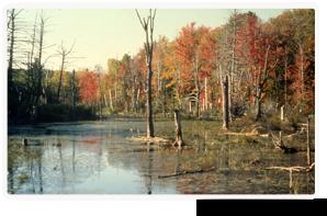 Marais Cavan, Ontario (photo de CNC)