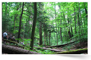 Randonneurs, Forêt Happy Valley, Ont. (Photo de CNC)