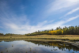 Beaver Hills, AB (Photo by Brent Calver)
