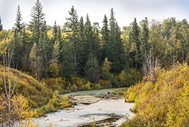 Beaver Hills woodlands and riparian areas (Photo by Brent Calver)