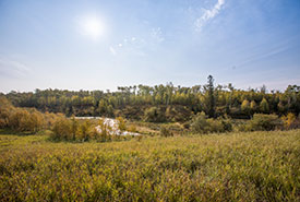 NCC conservation property in Beaver Hills (Photo by Brent Calver)