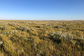 Prairie grassland (Photo by Ashlyn Herron/NCC staff)