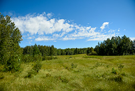 Bunchberry Meadows, AB (Photo by NCC)