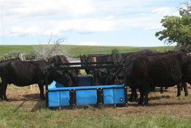 Cattle drinking from water system (Photo by NCC)