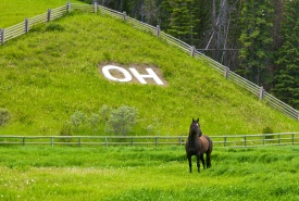 OH Ranch, AB (Photo by Karol Dabbs)