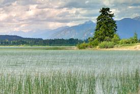 Milieux humides, Lac Columbia, C.-B. (Photo de CNC)