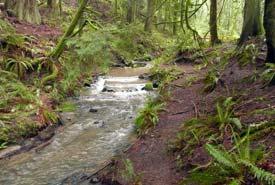 Creekside Rainforest, Salt Spring Island, BC (Photo by Tamsin Baker)